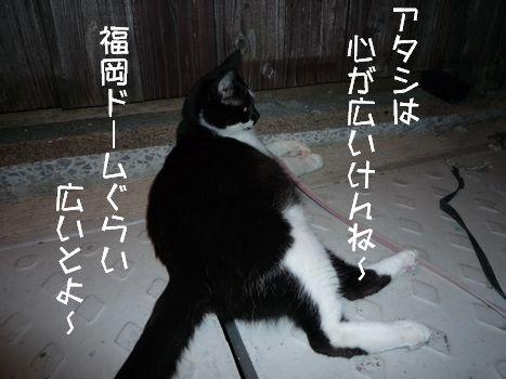 ネコさま 許容範囲はゴールデン以上ですがなにか?