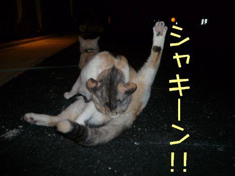 ネコさまシャキーン☆