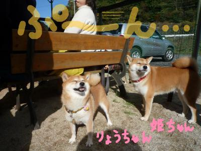snap_nobirumaruajinikkori_200812011155.jpg