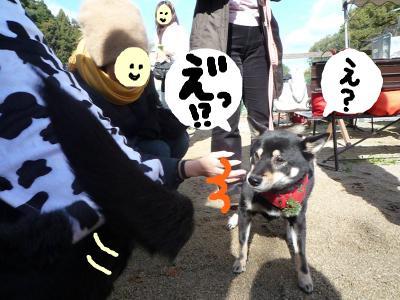 snap_nobirumaruajinikkori_200812011530.jpg