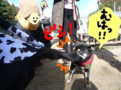 snap_nobirumaruajinikkori_2008120122225.jpg