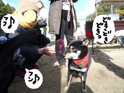 snap_nobirumaruajinikkori_200812012291.jpg