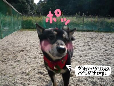 snap_nobirumaruajinikkori_2008120124438.jpg