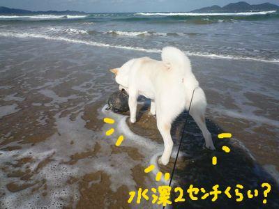 snap_nobirumaruajinikkori_200910151633.jpg