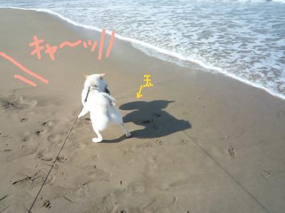 snap_nobirumaruajinikkori_200910155826.jpg