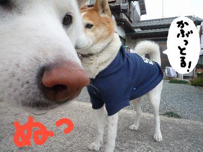 snap_nobirumaruajinikkori_200910172636.jpg