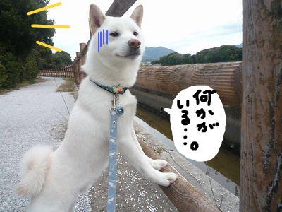 snap_nobirumaruajinikkori_200910173650.jpg