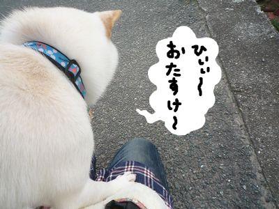 snap_nobirumaruajinikkori_20091017520.jpg