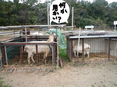 snap_nobirumaruajinikkori_20091017571.jpg