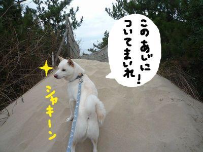snap_nobirumaruajinikkori_200910183420.jpg