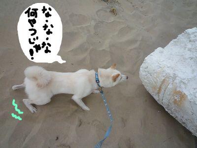 snap_nobirumaruajinikkori_200910185019.jpg
