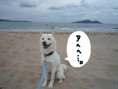 snap_nobirumaruajinikkori_20091019643.jpg