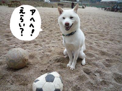 snap_nobirumaruajinikkori_200910202055.jpg