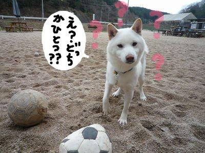 snap_nobirumaruajinikkori_200910202950.jpg