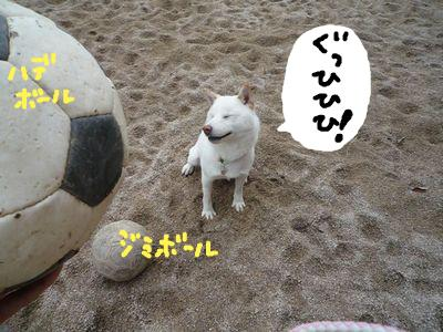 snap_nobirumaruajinikkori_200910203550.jpg