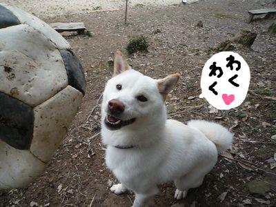 snap_nobirumaruajinikkori_200910204633.jpg