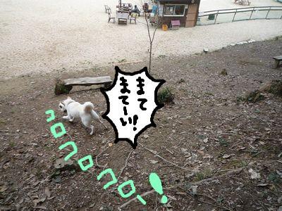 snap_nobirumaruajinikkori_200910205240.jpg