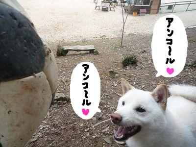 snap_nobirumaruajinikkori_20091021348.jpg