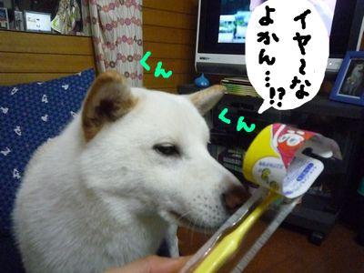 snap_nobirumaruajinikkori_200910221344.jpg