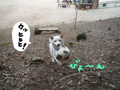 snap_nobirumaruajinikkori_200911154158.jpg