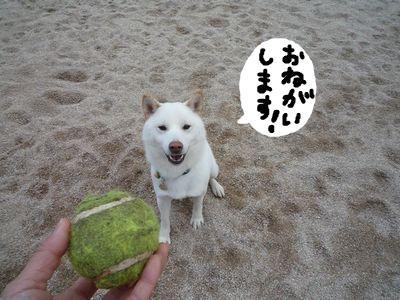 snap_nobirumaruajinikkori_200911154524.jpg