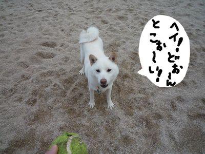 snap_nobirumaruajinikkori_20091116151.jpg