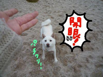snap_nobirumaruajinikkori_200911162011.jpg
