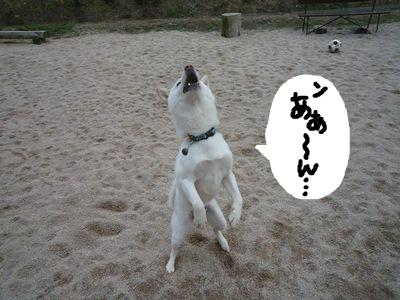 snap_nobirumaruajinikkori_200911162650.jpg