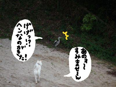 snap_nobirumaruajinikkori_200911165428.jpg