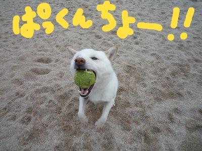 snap_nobirumaruajinikkori_20091116735.jpg
