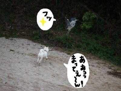 snap_nobirumaruajinikkori_20091117038.jpg