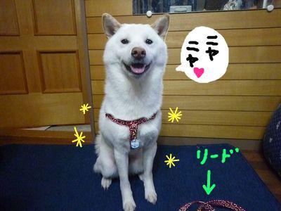 snap_nobirumaruajinikkori_20091121493.jpg