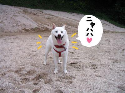 snap_nobirumaruajinikkori_200911215638.jpg