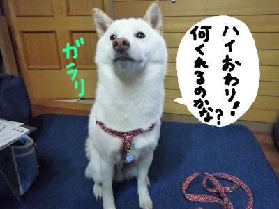 snap_nobirumaruajinikkori_200911223110.jpg
