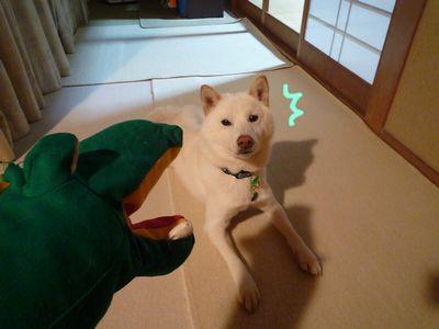 snap_nobirumaruajinikkori_200911225932.jpg