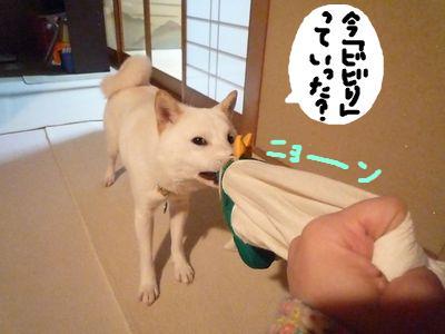 snap_nobirumaruajinikkori_200911231053.jpg