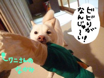 snap_nobirumaruajinikkori_200911232115.jpg