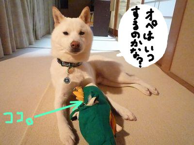 snap_nobirumaruajinikkori_200911233324.jpg