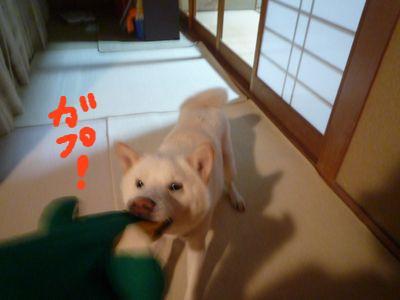 snap_nobirumaruajinikkori_20091123354.jpg