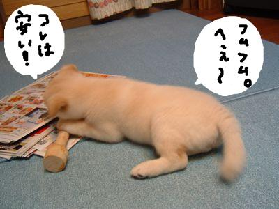 snap_nobirumaruajinikkori_200913224626.jpg
