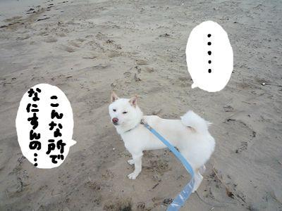 snap_nobirumaruajinikkori_200913233750.jpg
