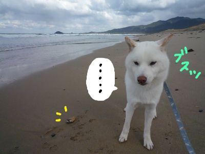 snap_nobirumaruajinikkori_20091323432.jpg