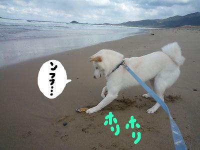 snap_nobirumaruajinikkori_200913234922.jpg