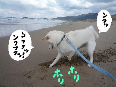 snap_nobirumaruajinikkori_200913235647.jpg