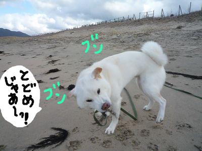 snap_nobirumaruajinikkori_2009140248.jpg