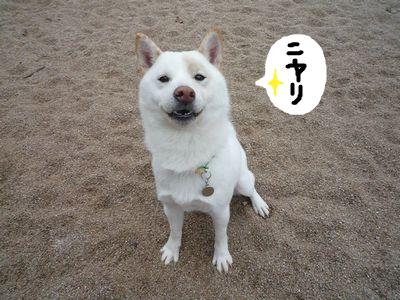 snap_nobirumaruajinikkori_200915215214.jpg
