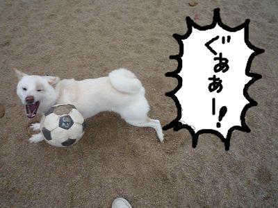 snap_nobirumaruajinikkori_20091522193.jpg