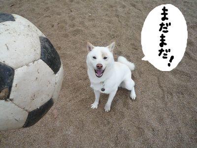 snap_nobirumaruajinikkori_200915224250.jpg