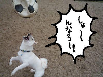 snap_nobirumaruajinikkori_200915224856.jpg