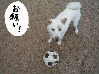 snap_nobirumaruajinikkori_20091522942.jpg